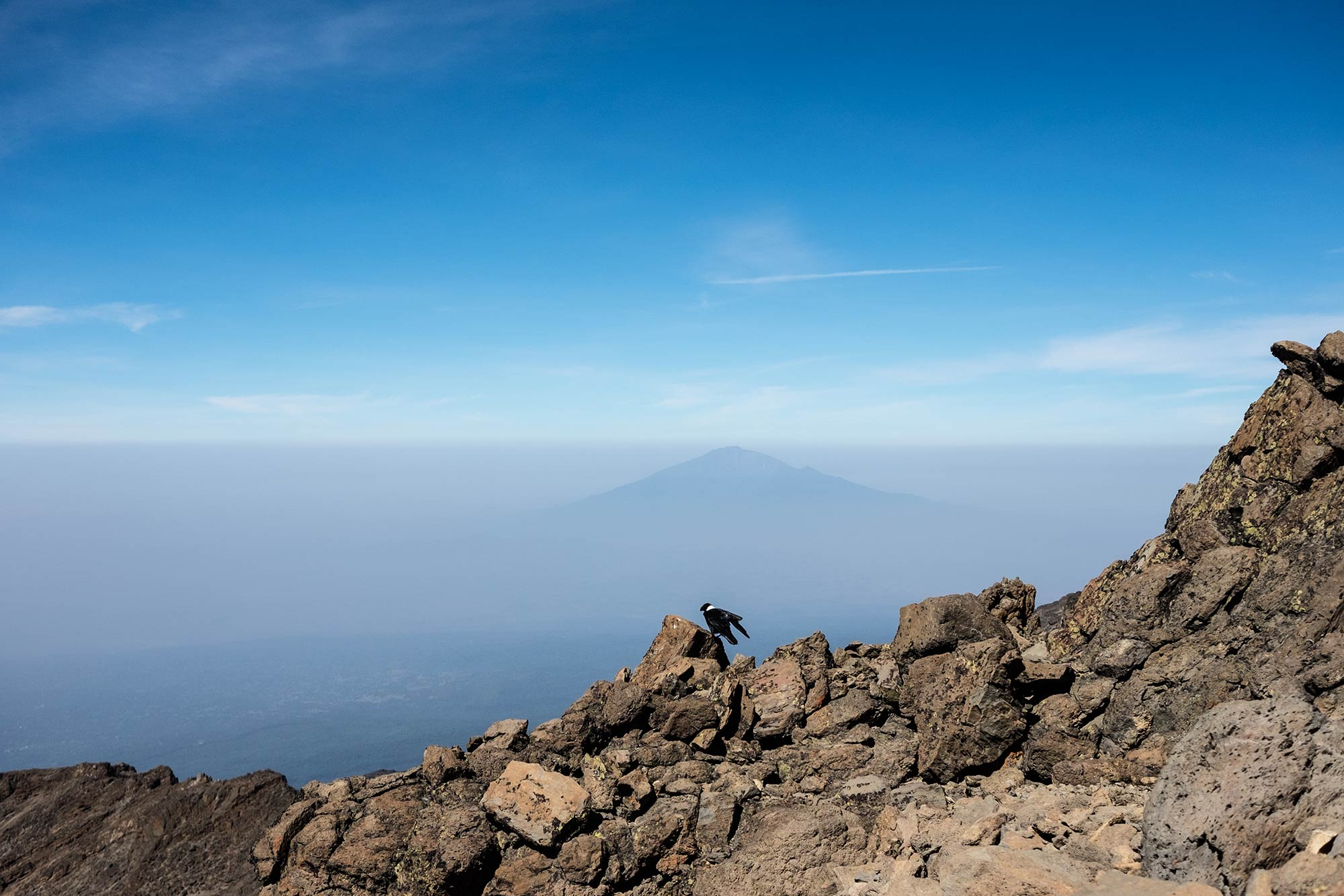 Even at 16,000 feet on a barren Kilimanjaro rock with no water source for miles, there's life. Mount Meru is visible in the background.