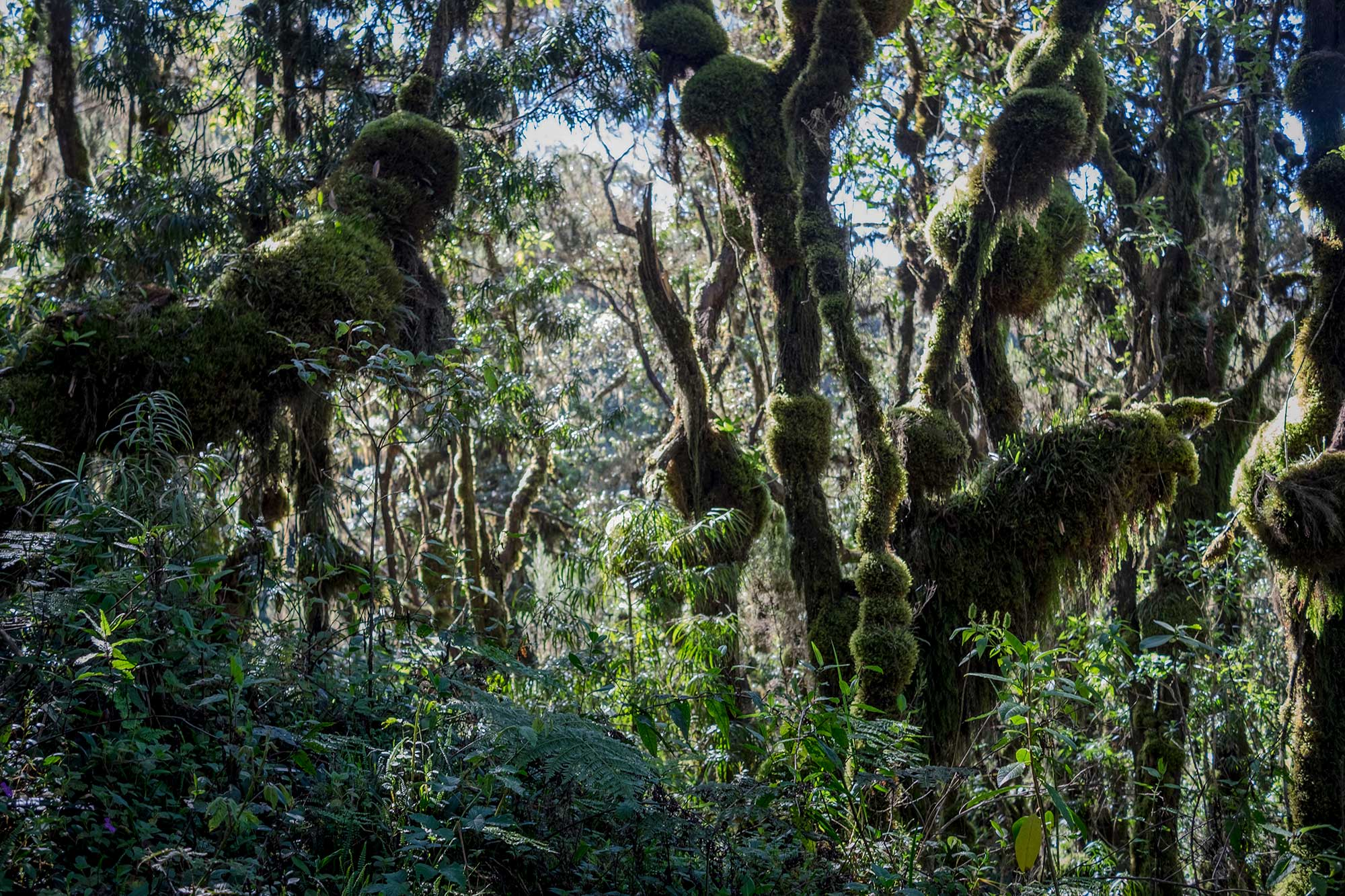 After spending days above the tree line, the return to the jungle felt even more foreign and exotic than the beginning of the trip.