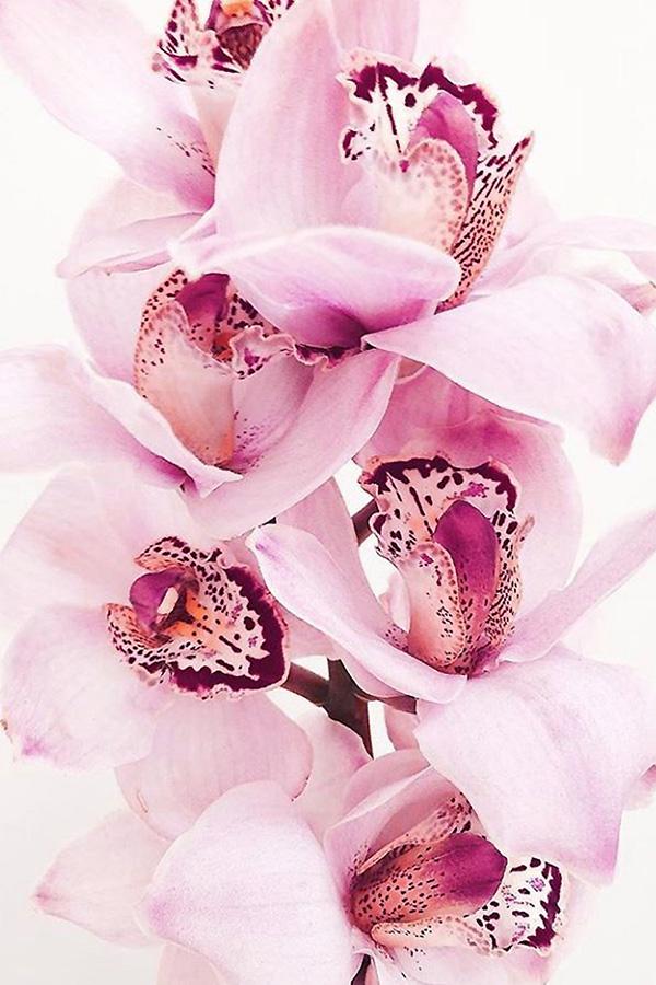MERAKI LUXE BLUSH MOOD FASHION 1 ORCHID LOVER.jpg