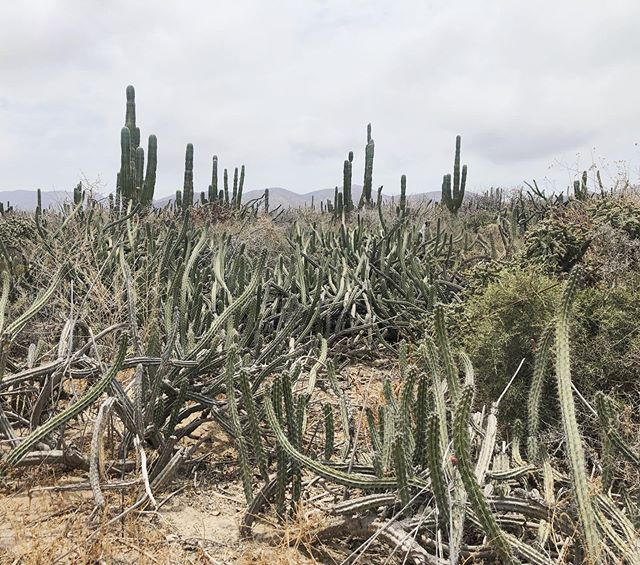 Never seen so many cactuses in my life.