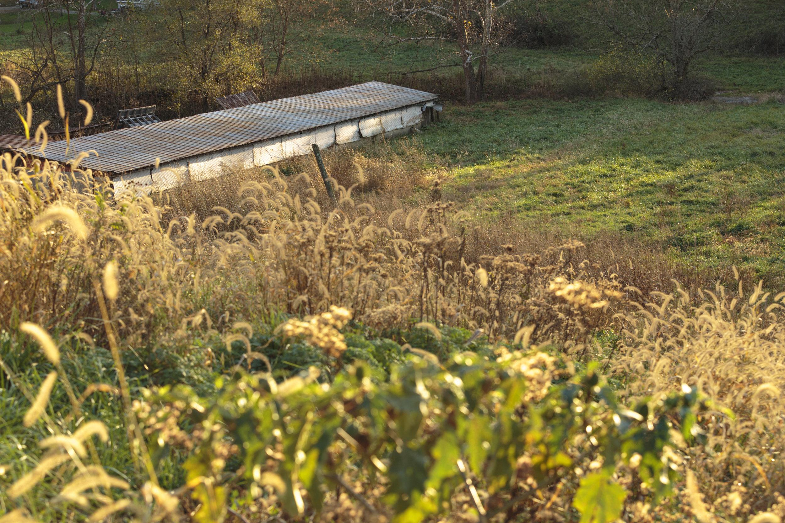 Corcoran Farm3.jpg