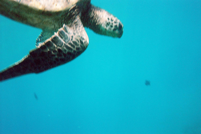hawaiieditorial0013.jpg
