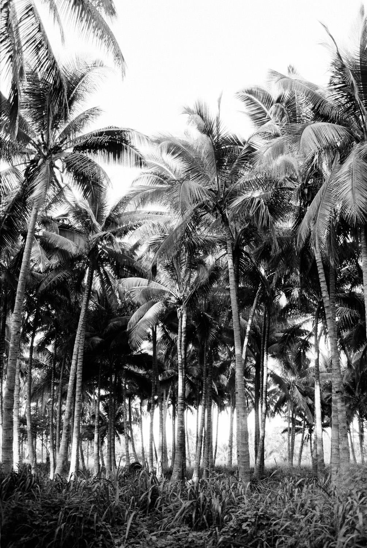 hawaiieditorial0027.jpg