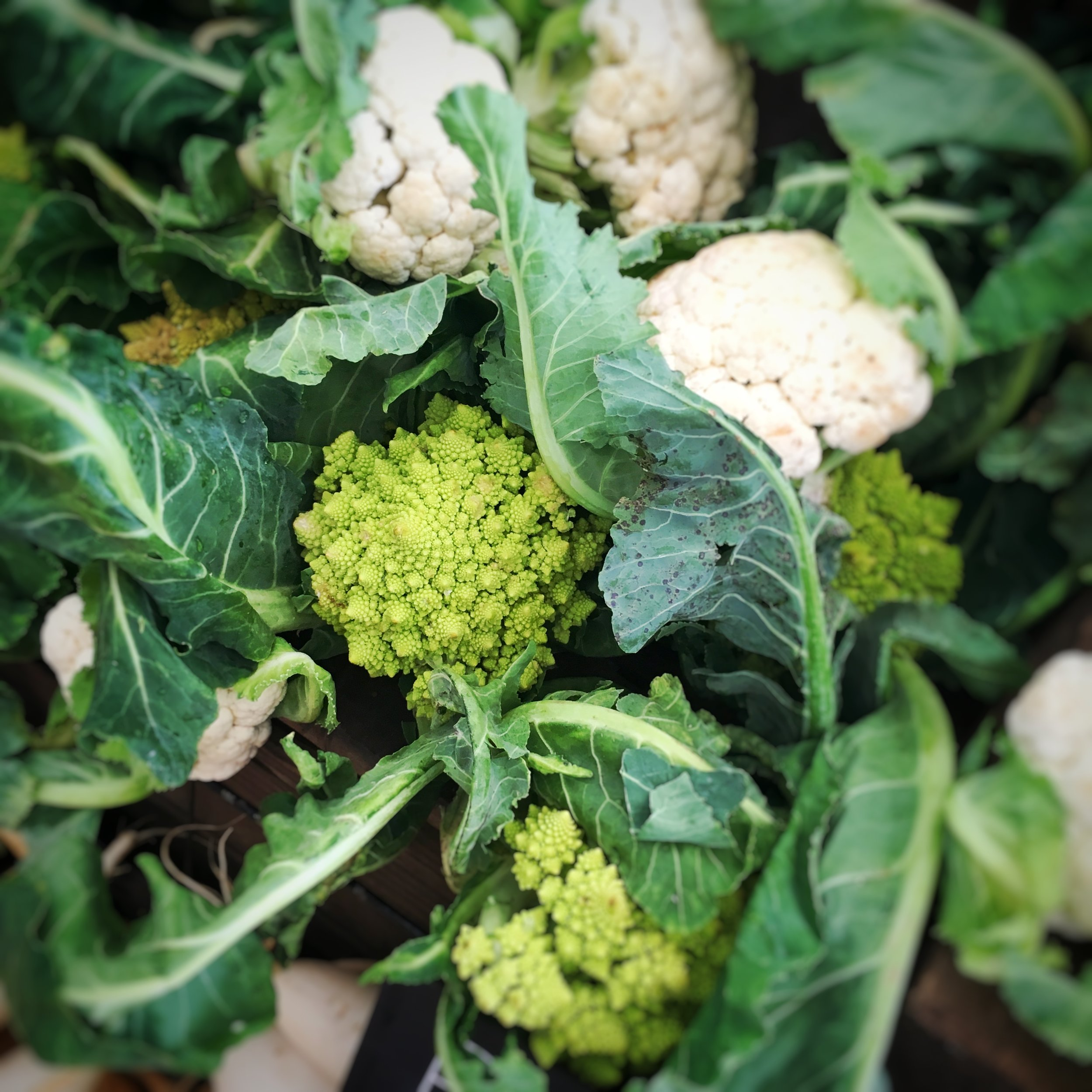 Green spiral cauliflower - Because I just love the way this looks and feels....