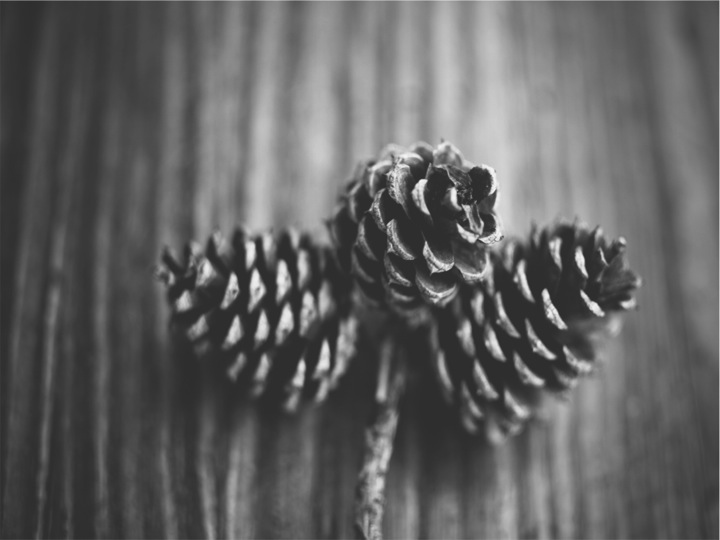WHAT CAN PINECONES TELL US ABOUT THE WEATHER?
