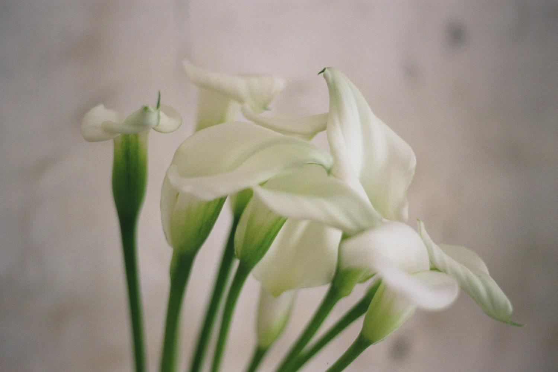 32_FlowersCS.jpg