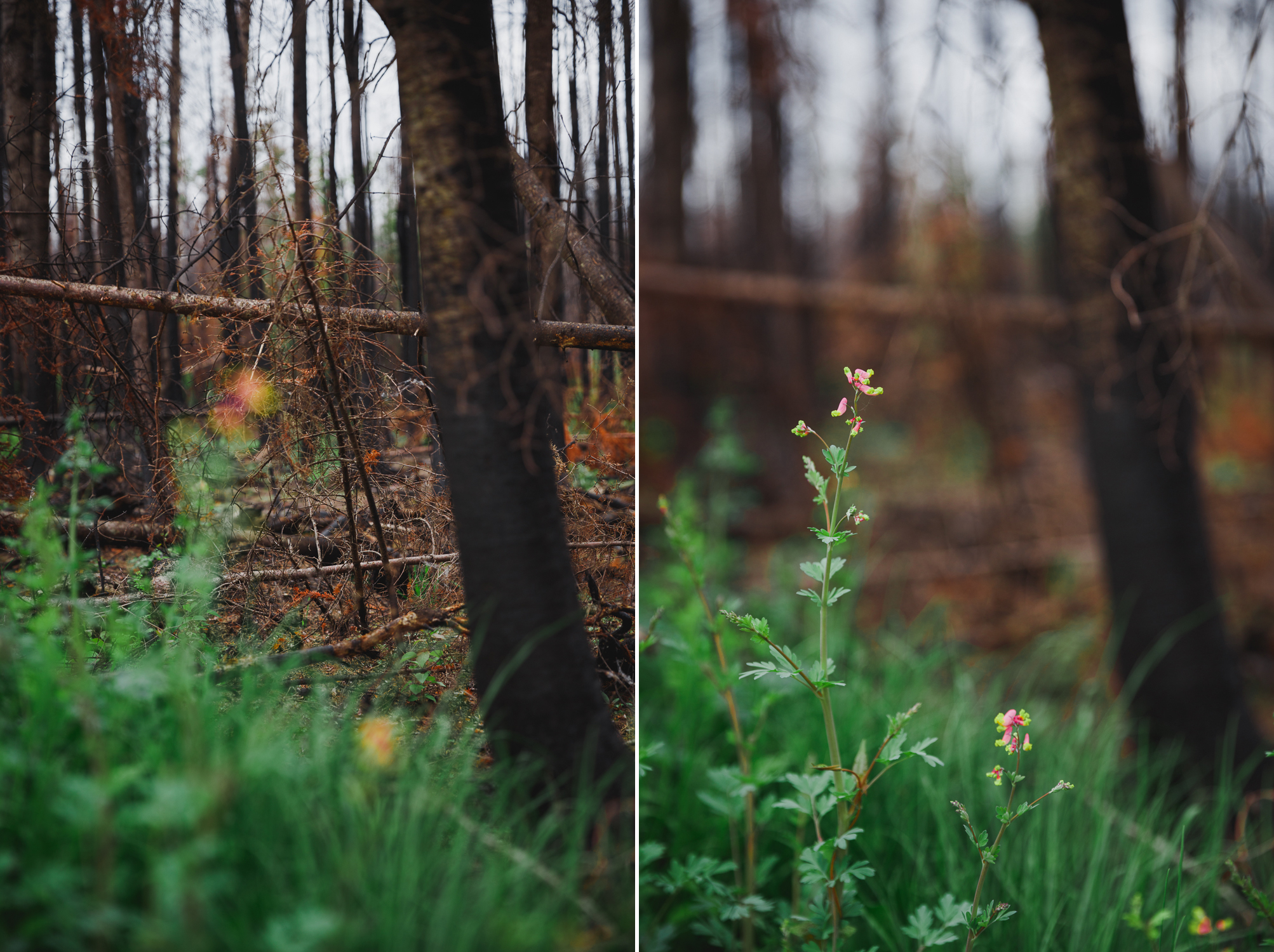 © Katee Pederson-41 copy.jpg