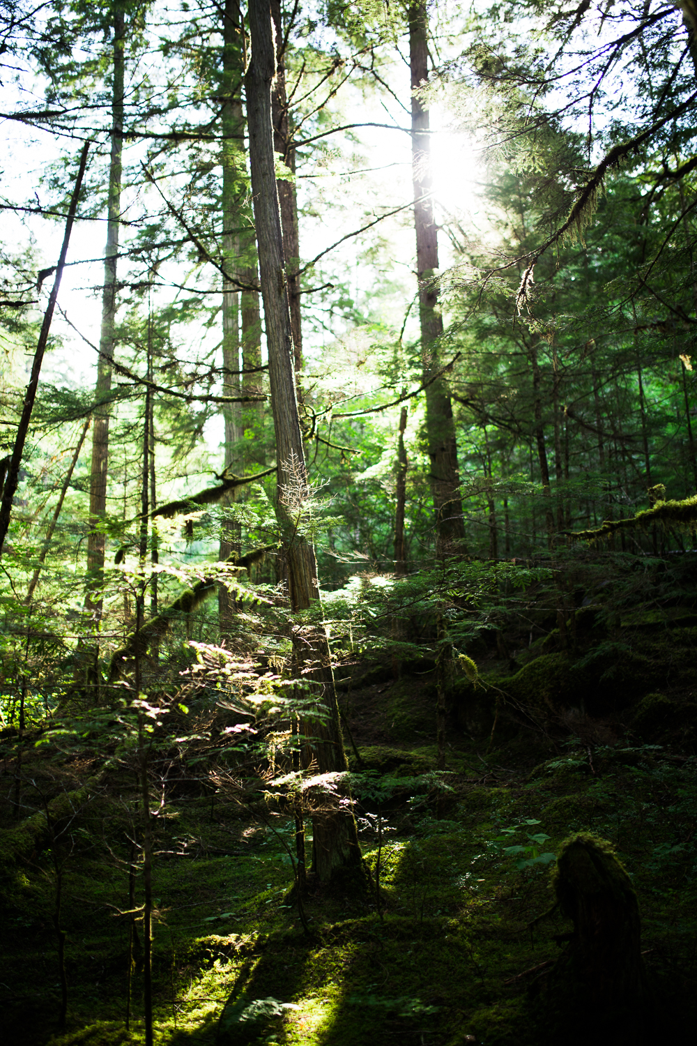Forest Hikes - August 4View Blog