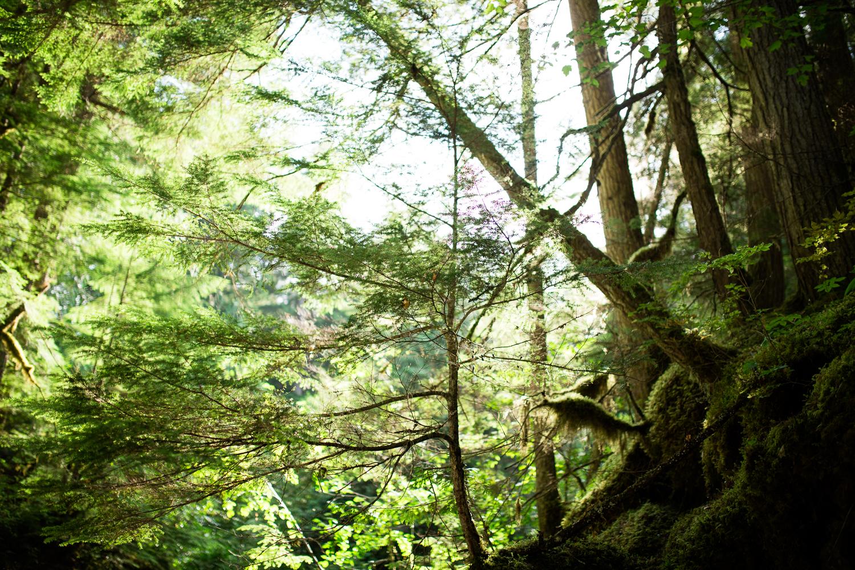 ©KateePederson-Banff-Revy-76.jpg
