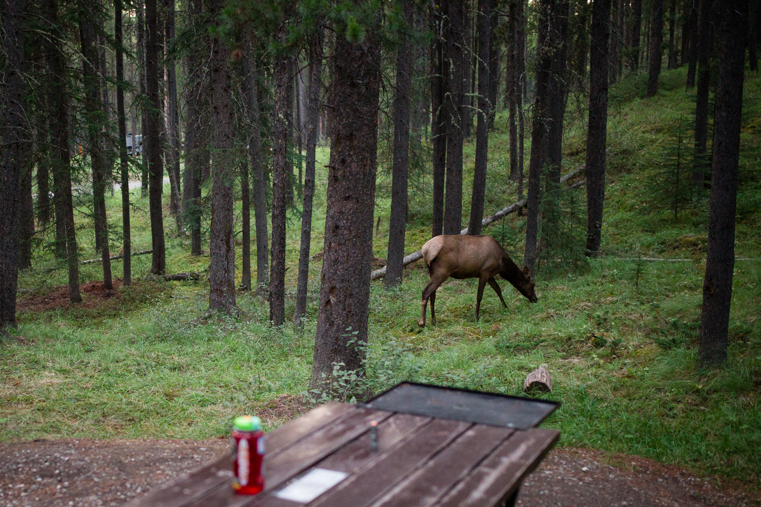We enjoyed our last chilly sleep in the mountains - even making a new elk friend - before our long weekend road trip came to an end. -