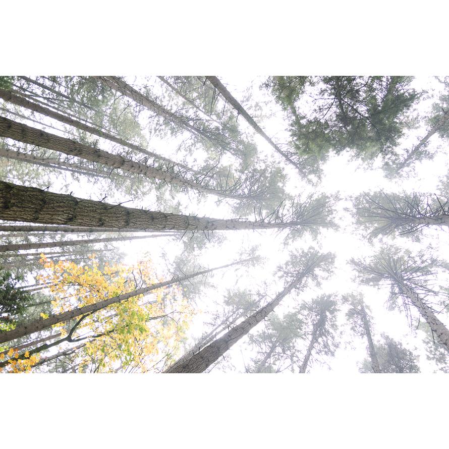 Forest_002.jpg