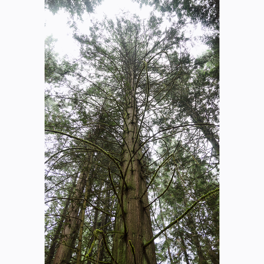 Forest_001.jpg