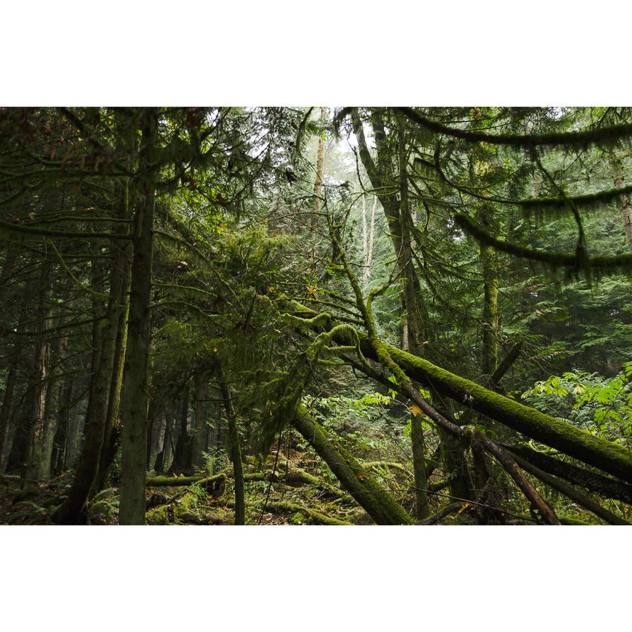 Forest_003.jpg
