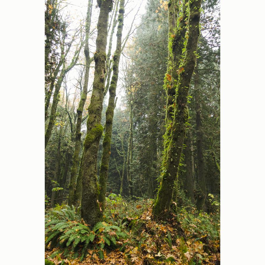 Forest_004.jpg