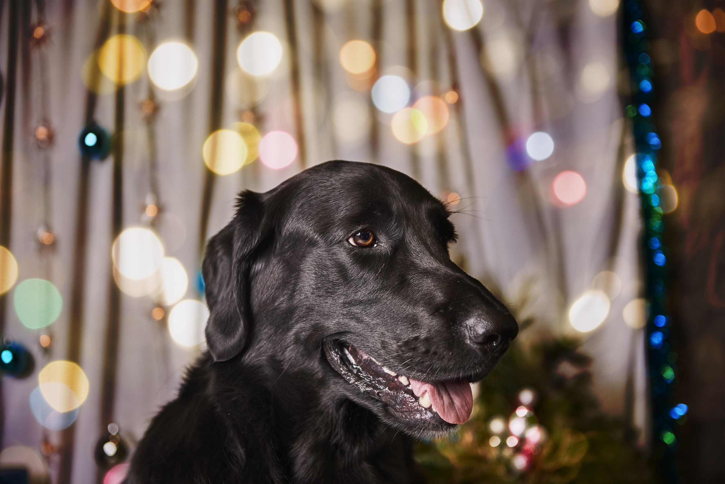 20161210 - DOG_365.jpg
