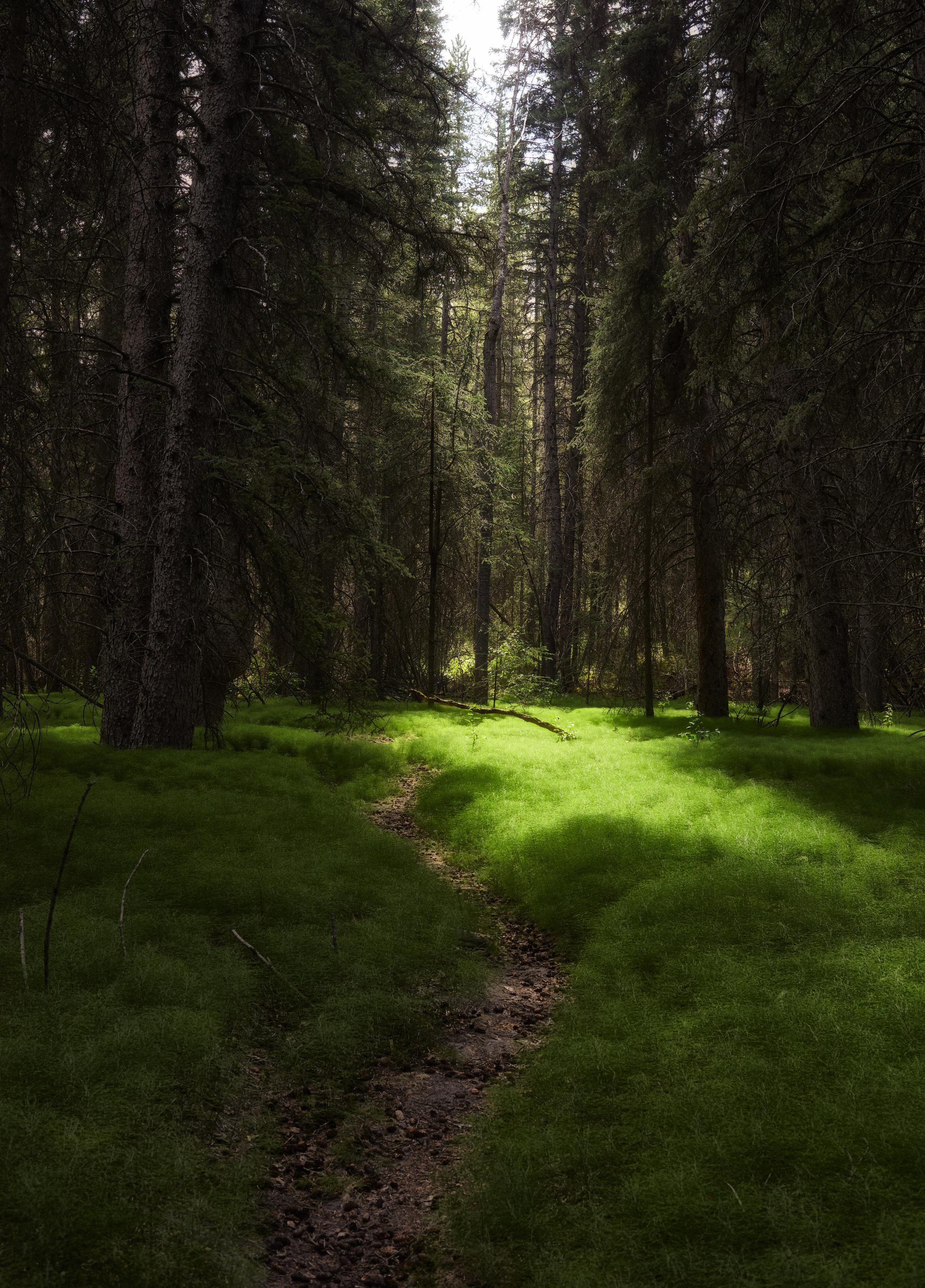 Fern-Forrest.jpg