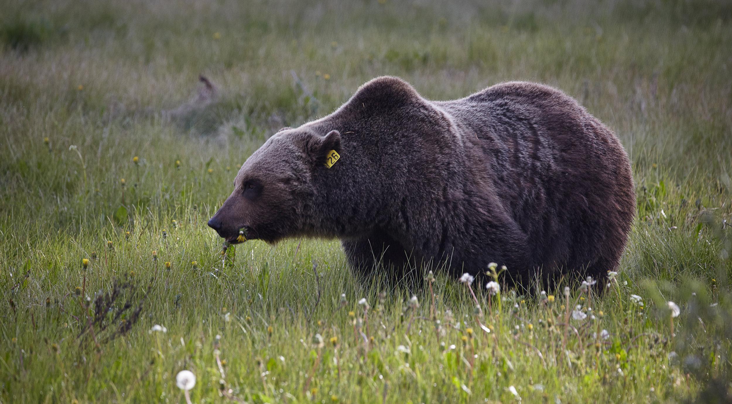 Bear126.jpg