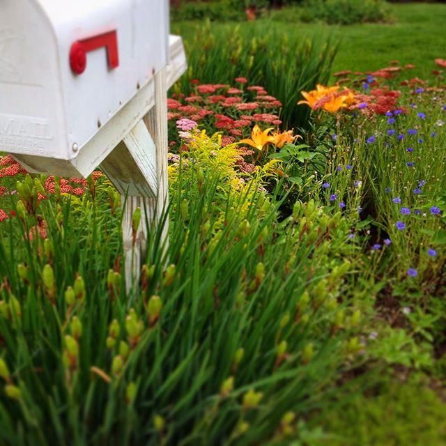 Snail mail garden by Micki H