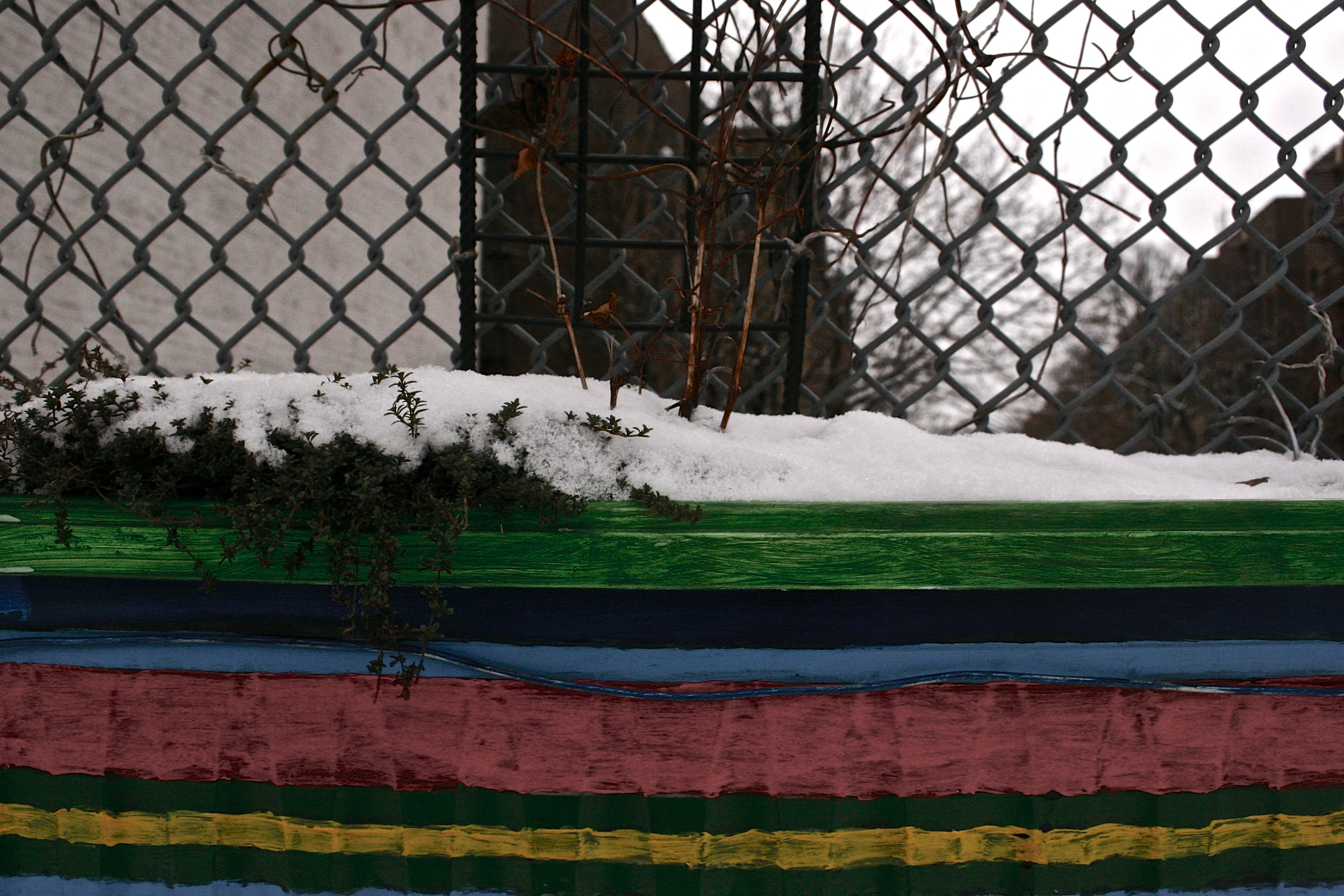 planter-in-snow-nyc-webecurry.jpg