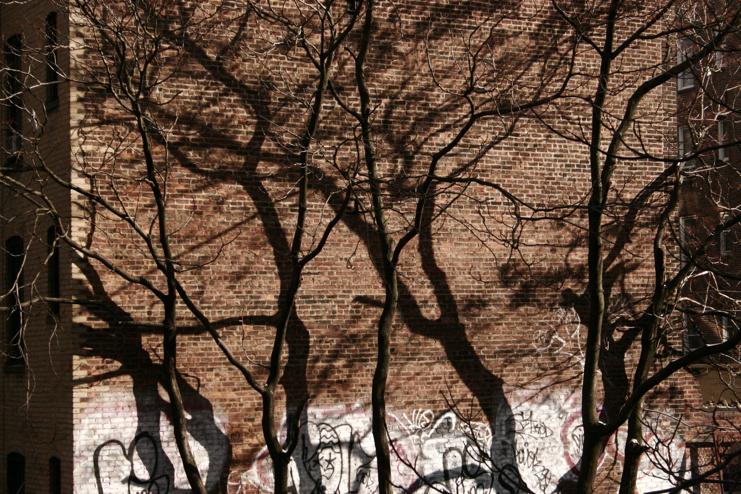 tress-casting-shadows-on-brick-nyc-webecurry.jpg