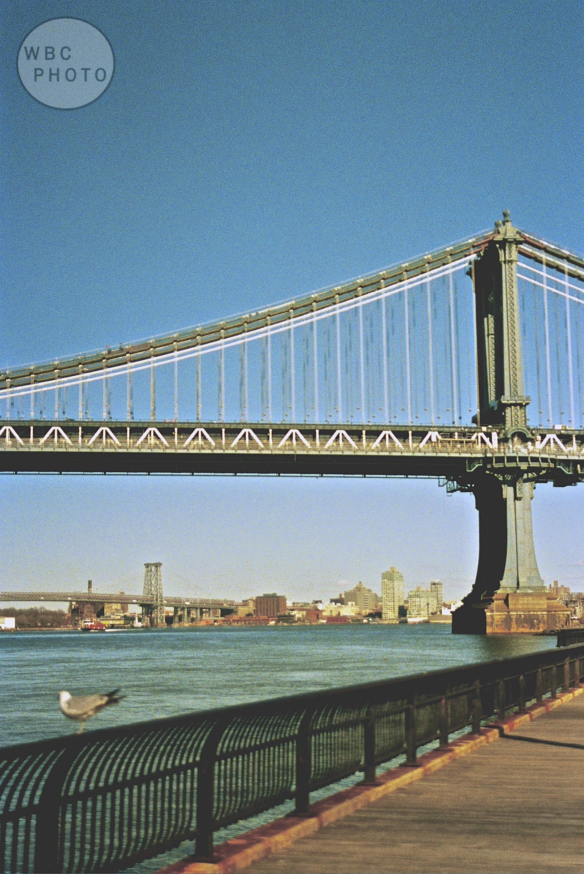 seagull-in-front-of-manhattan-bridge-wbc-film.jpg