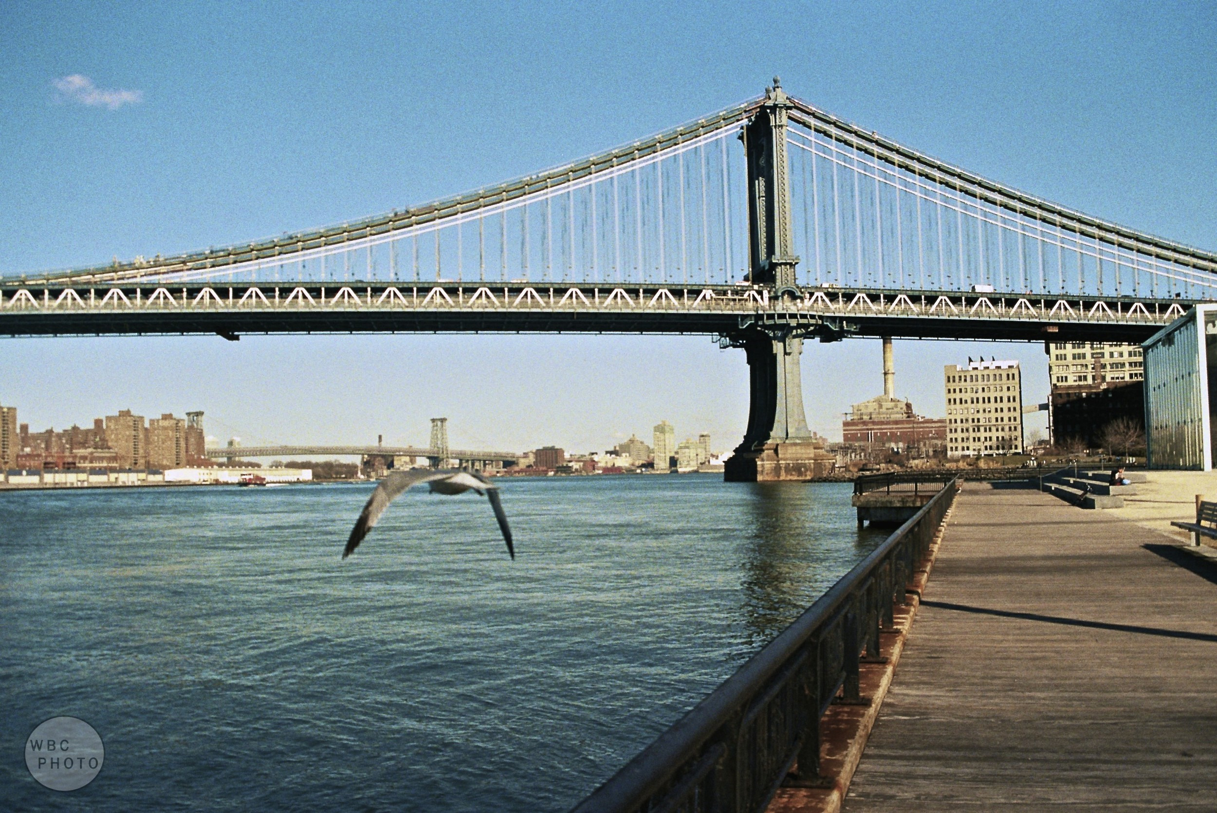 seagull-flys-towards-manhattan-bridge-wbc-film.jpg
