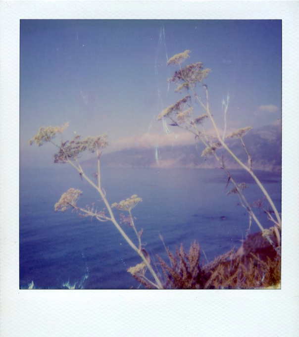 Coastal Flowers , Polaroid Film Photograph