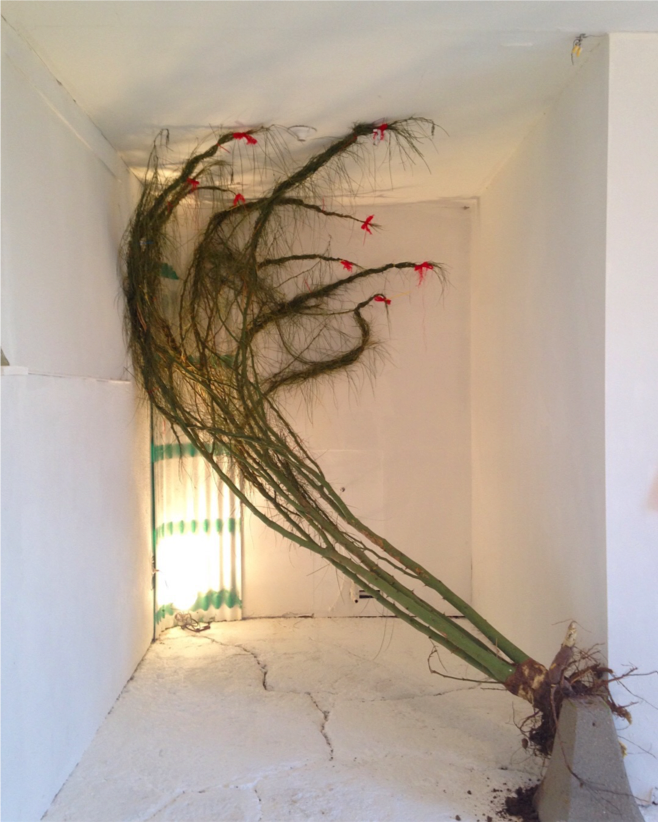 Braided Thorn Tree , 2018, Thorn tree, concrete, fiberglass awning, red bows, work light, installation, dimensions variable