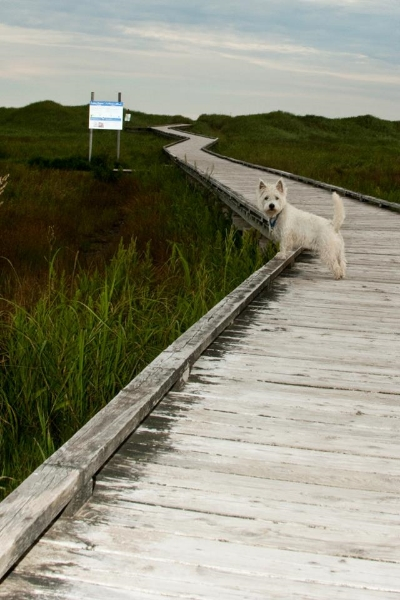 Emilie's favourite Incredible Shrinking Region photo: Conrad's Beach in Nova Scotia.