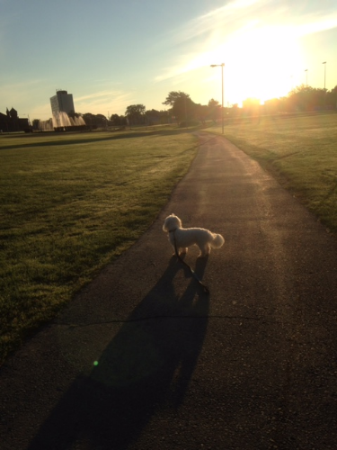 Because of dog walks in the evening.