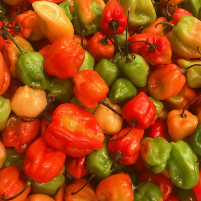 I love travel that tastes good and is photogenic too, like the peppers in Merida.