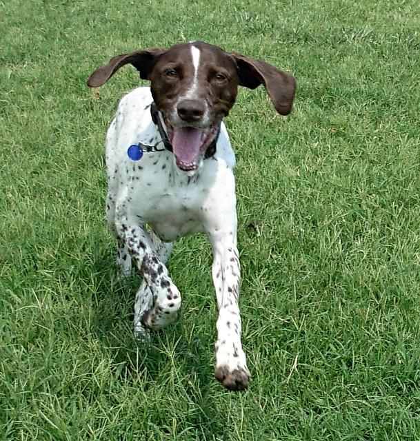 dog accident attorney