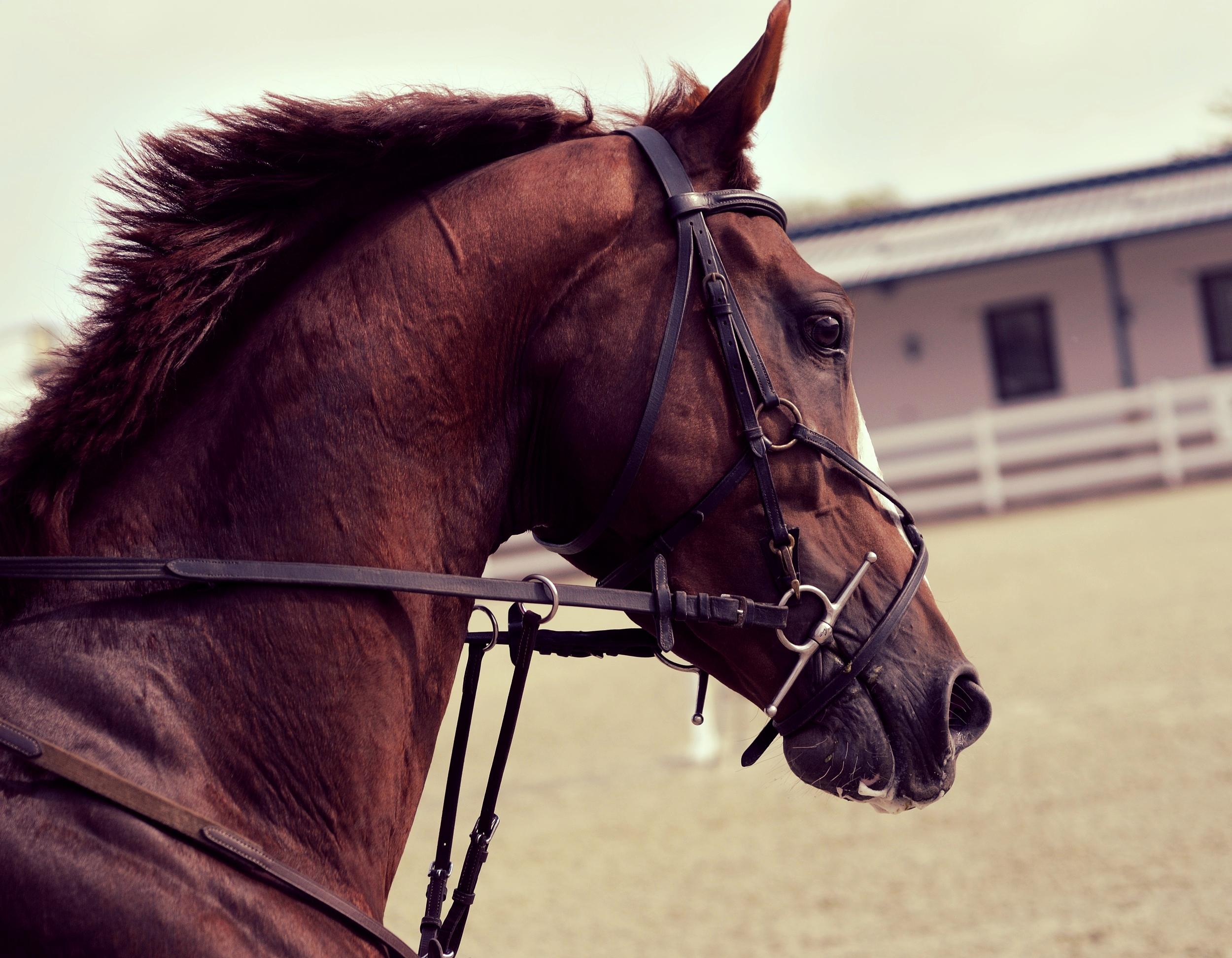 Horse Injury Lawyer