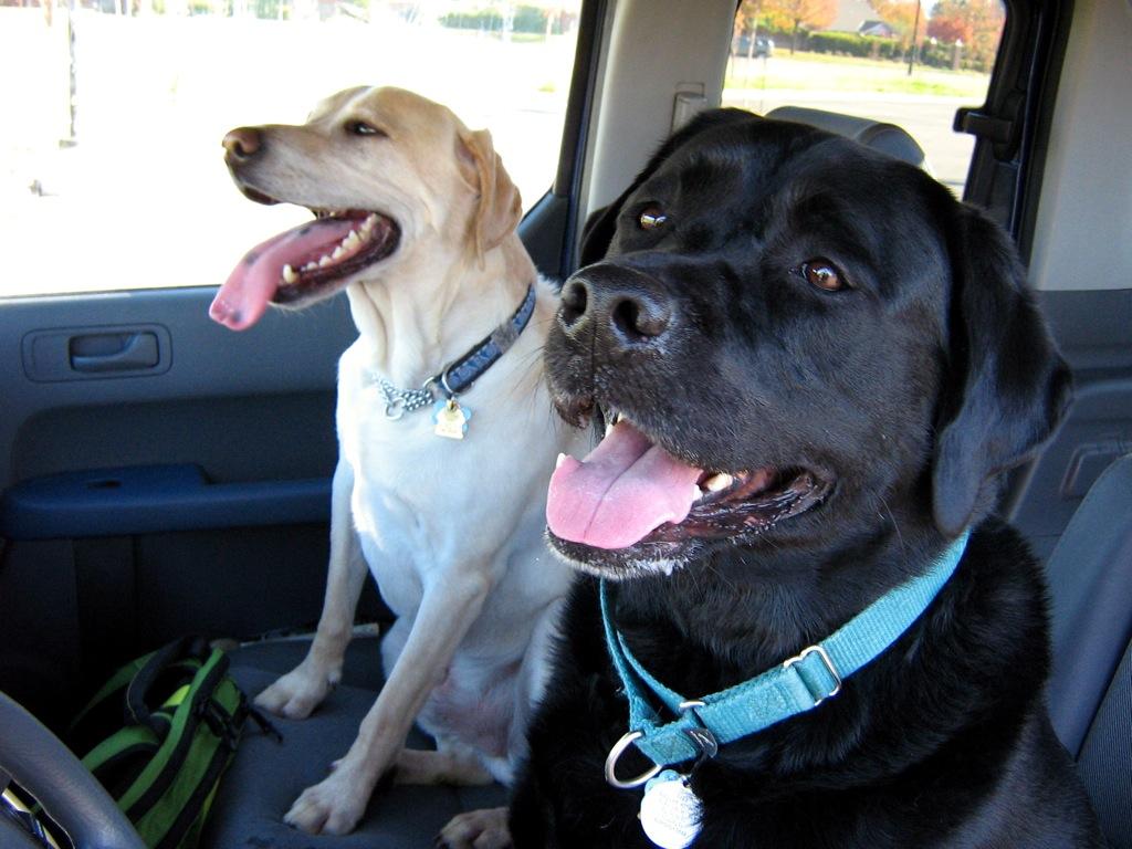 Car Crash Pet Injury Lawyer