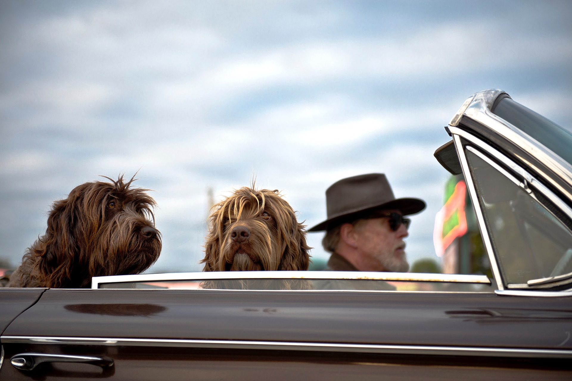 Michigan Dog Car Crash Lawyer