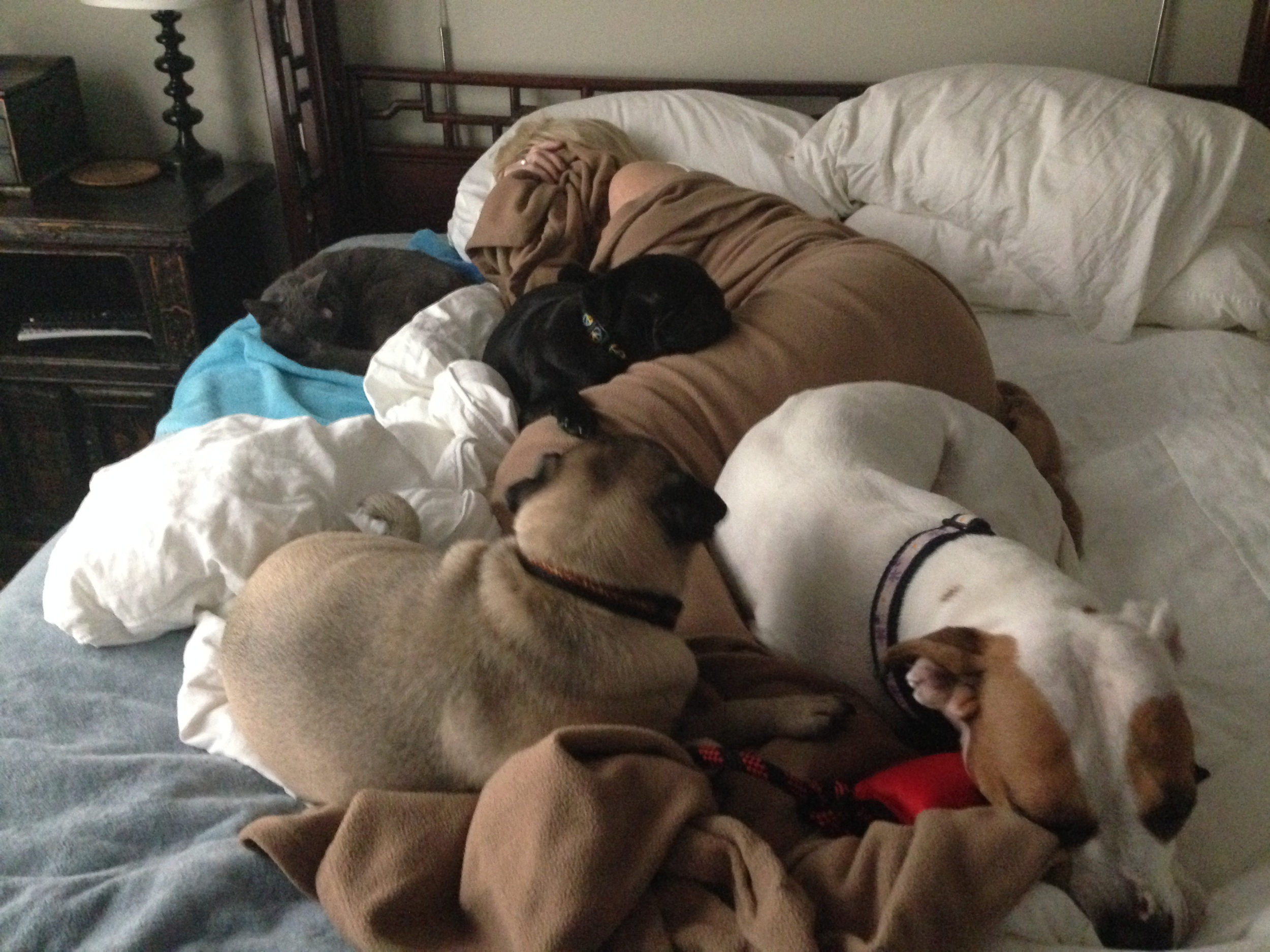 Dog Bed Lancaster County Pet