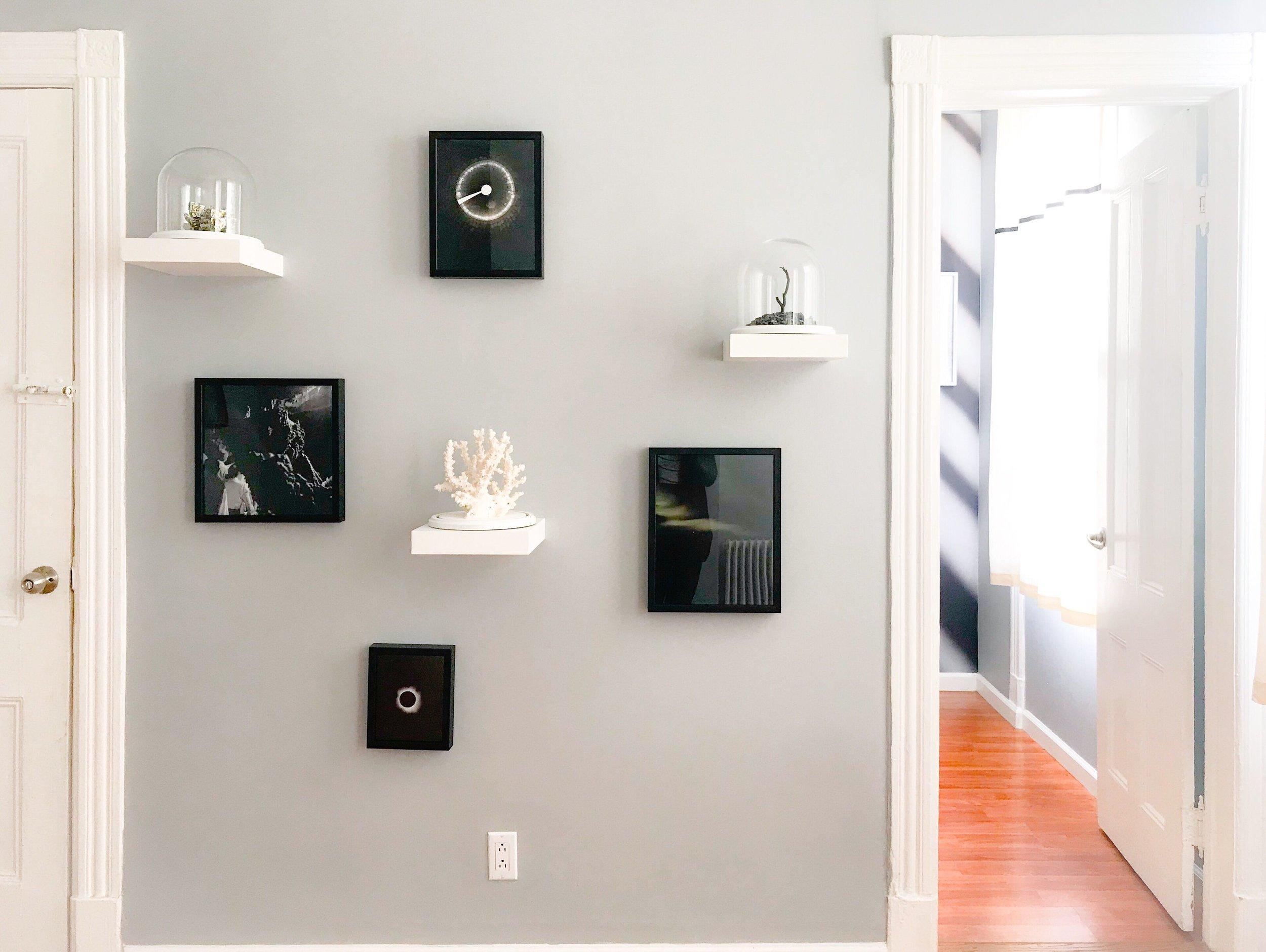 Specimen Wall.JPEG