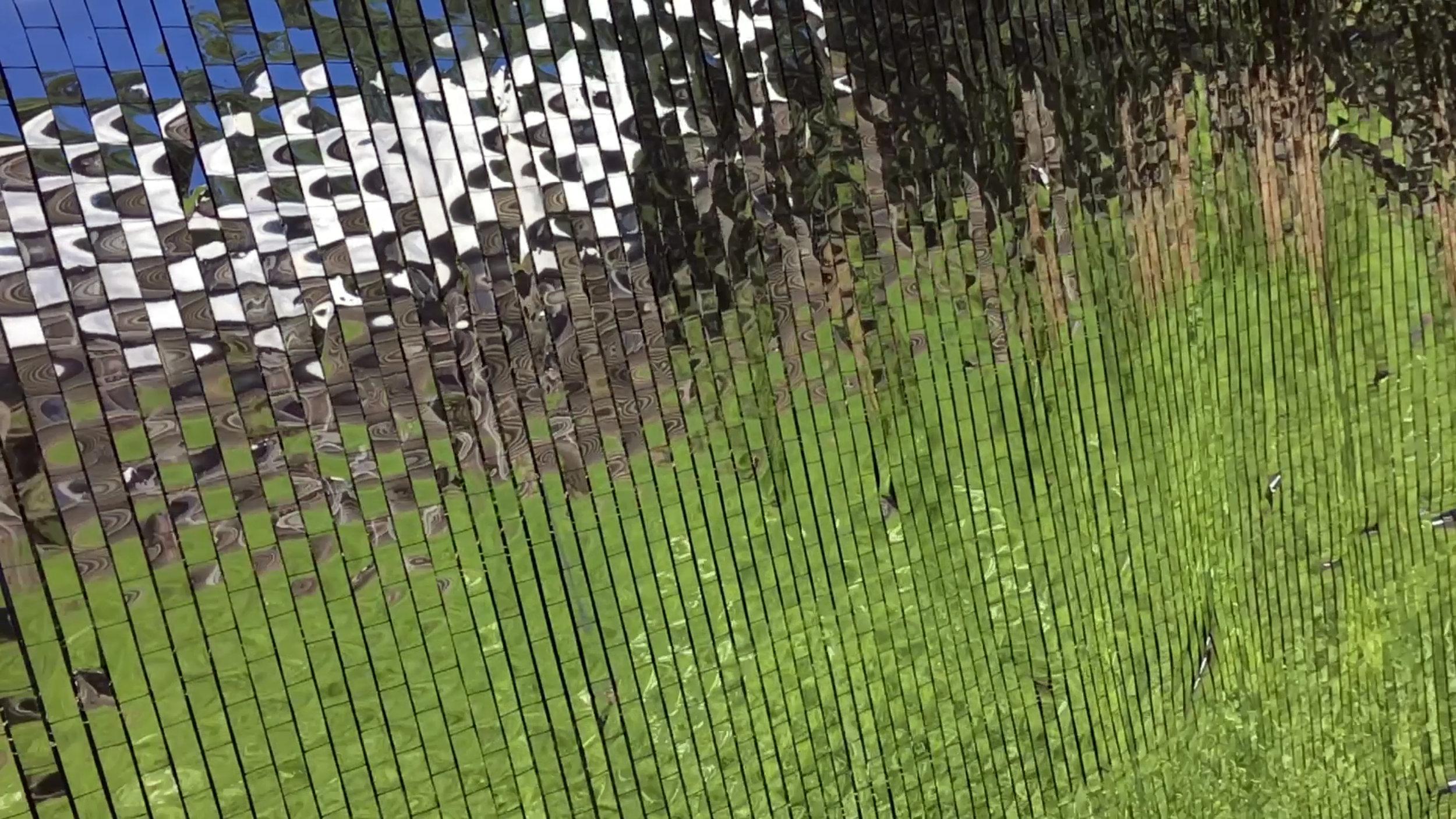 fieldflag1.jpg