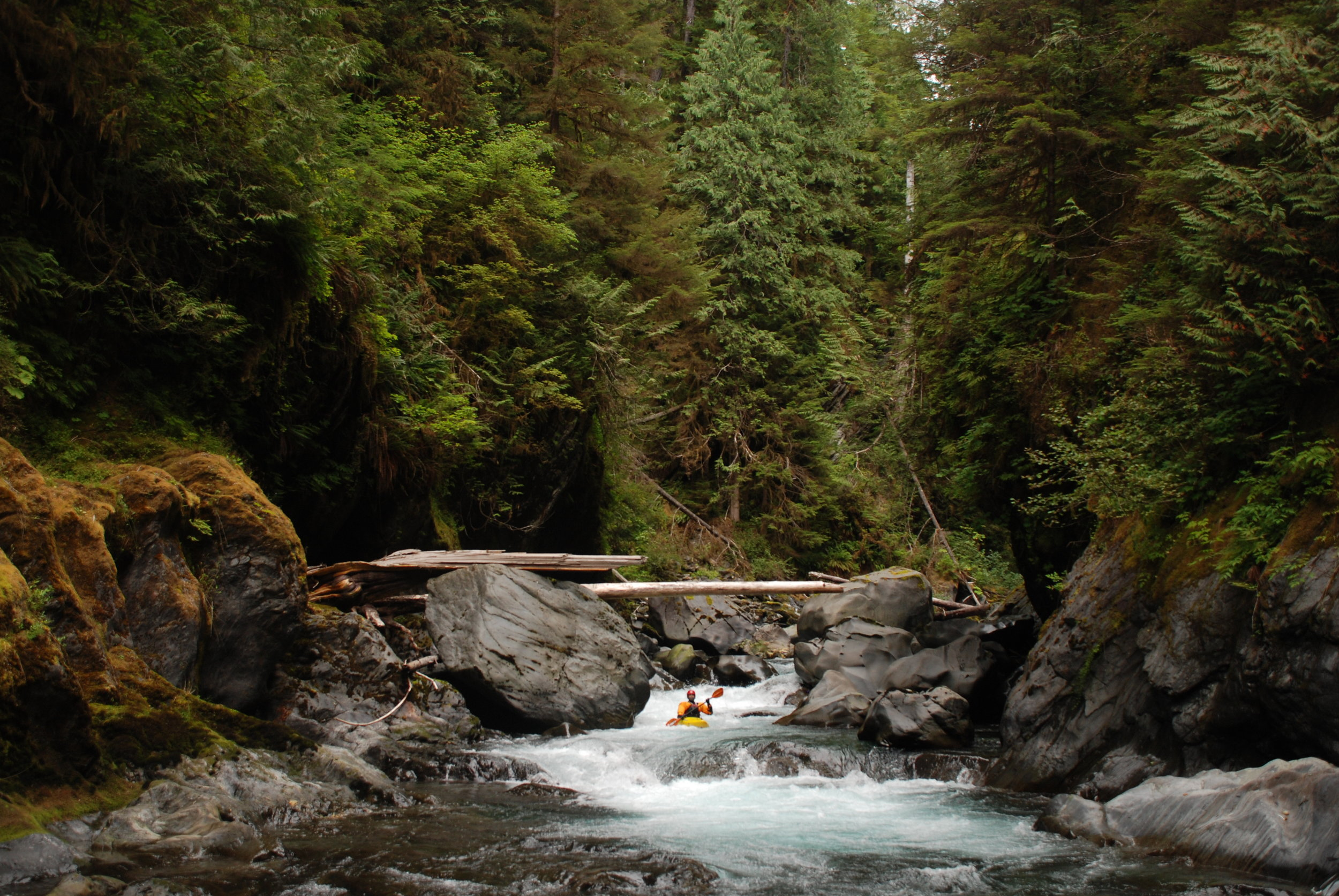 Paddling through the Quinault Gorge in the Wild Olympics, photo by Thomas O'Keefe