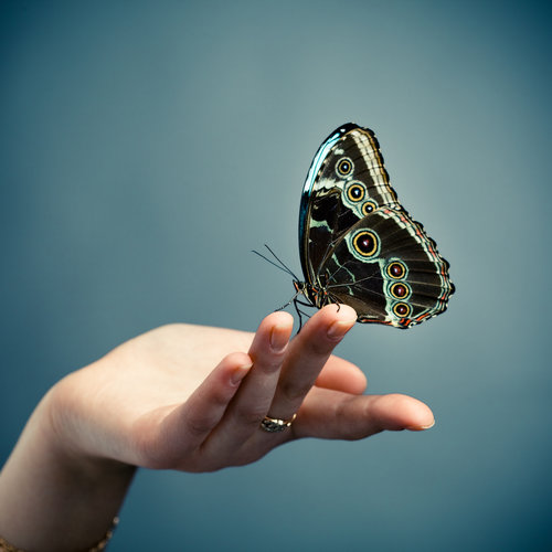 Free Butterfly Release - This is a no cost event, but you must register in advance in order to receive a butterfly envelope. Join us for lunch, face painting, games, a bouncy house and more!