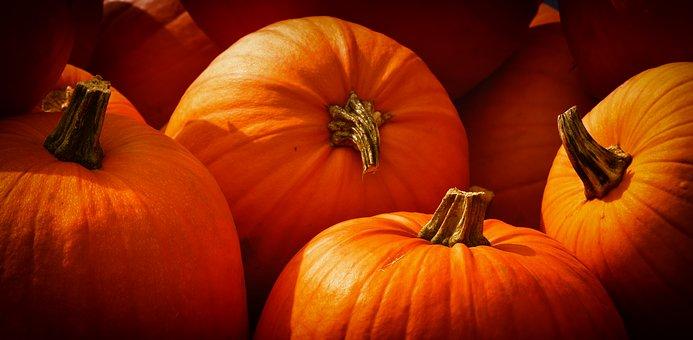 pumpkins-3726919__340.jpg
