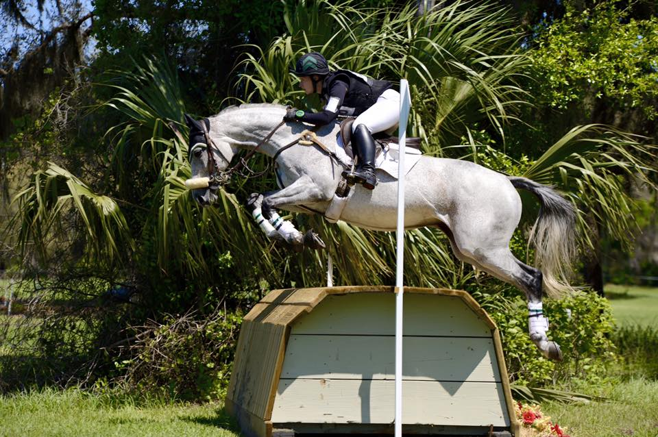 Sterling - 2005 OTTB 16.1 geldingCompeted through Preliminary Level Eventing and 1.25 Showjumping