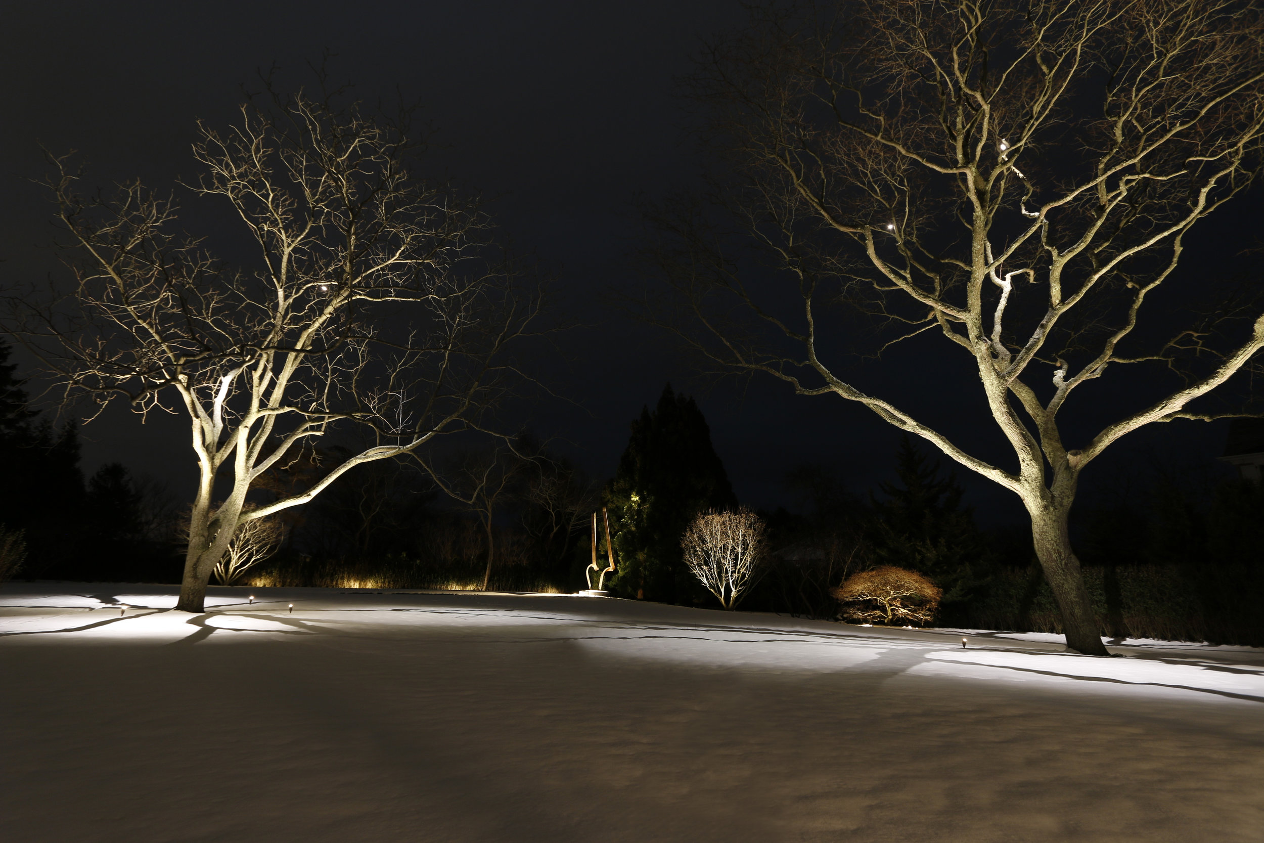 Two trees in snow.jpg