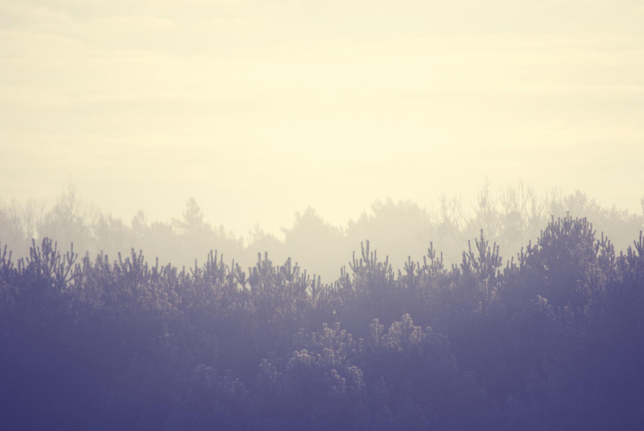 landscape-trees-winter-8781.jpg