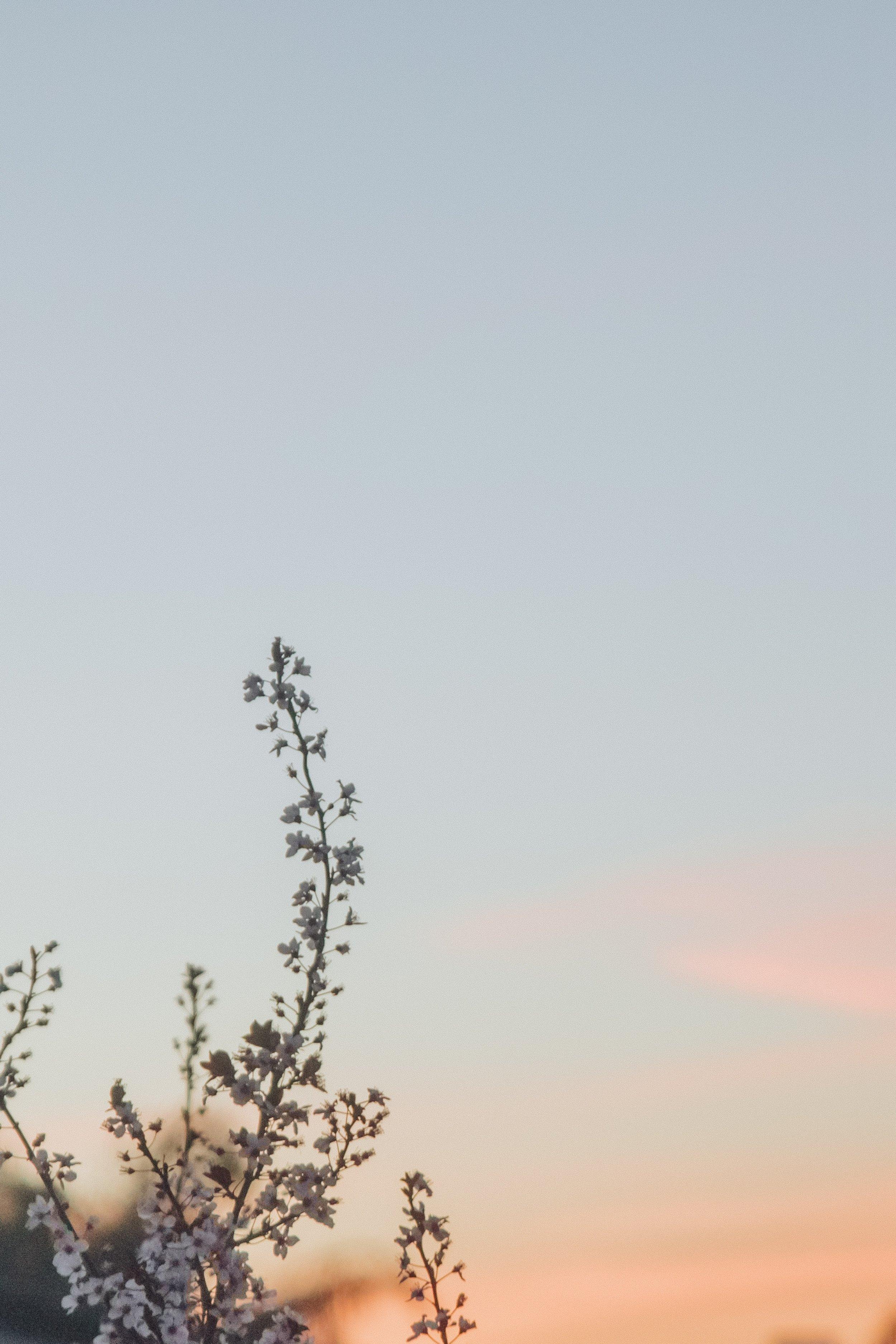caleb-woods-323928-unsplash.jpg
