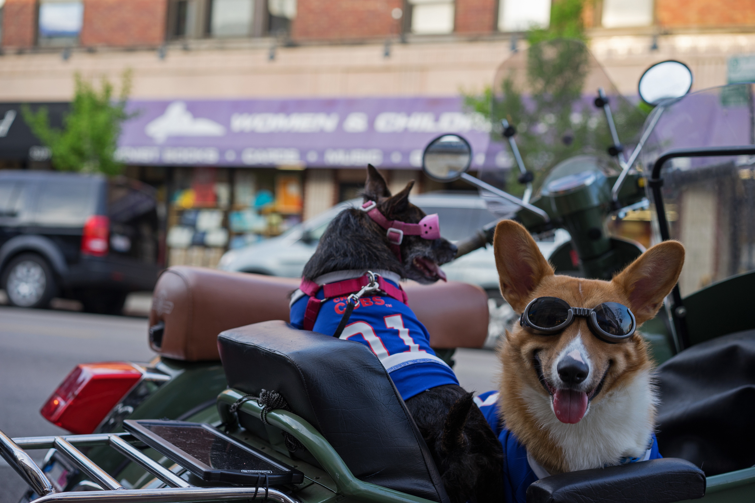 Had the content been different, this is the kind of photo that I might've called dull in terms of lens performance, but your gear's shortcomings don't matter quite so much when you find two dogs wearing  doggles  and Cubs shirts in a Vespa sidecar.