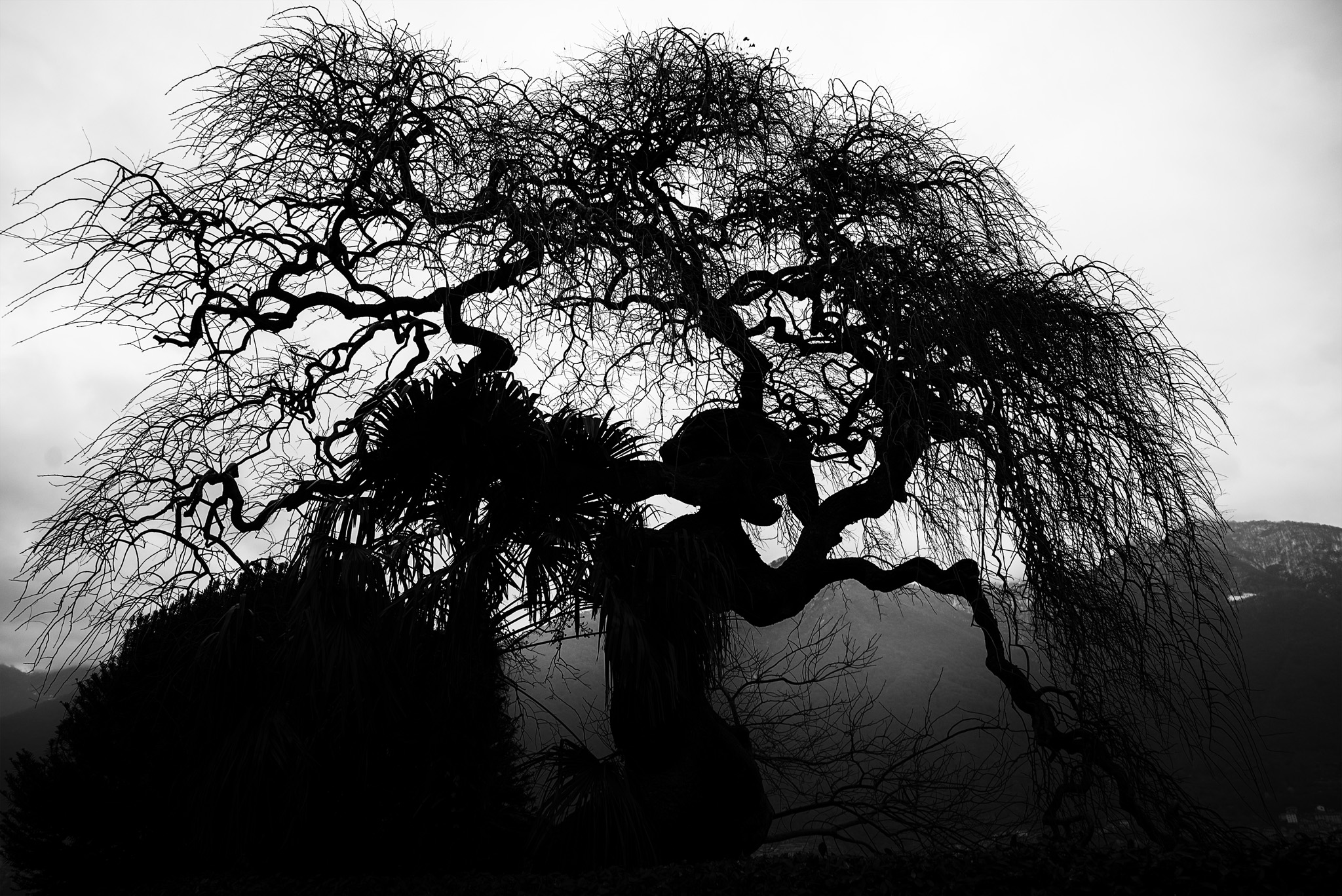 Do you see the silhouetted witch? f/5.0, 1/200th shutter, ISO 100.