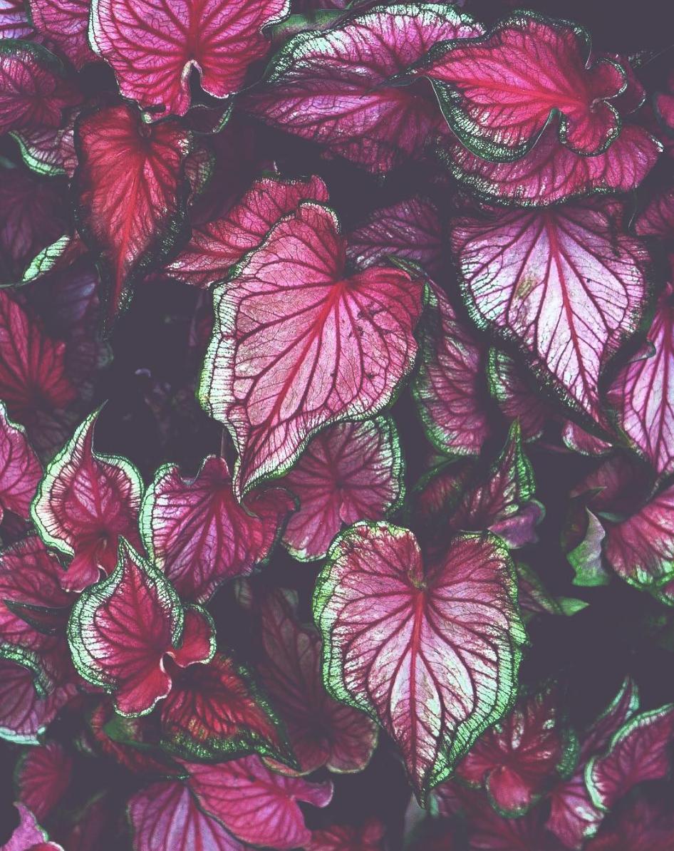 crisp_flowers_woodruff_cory.png