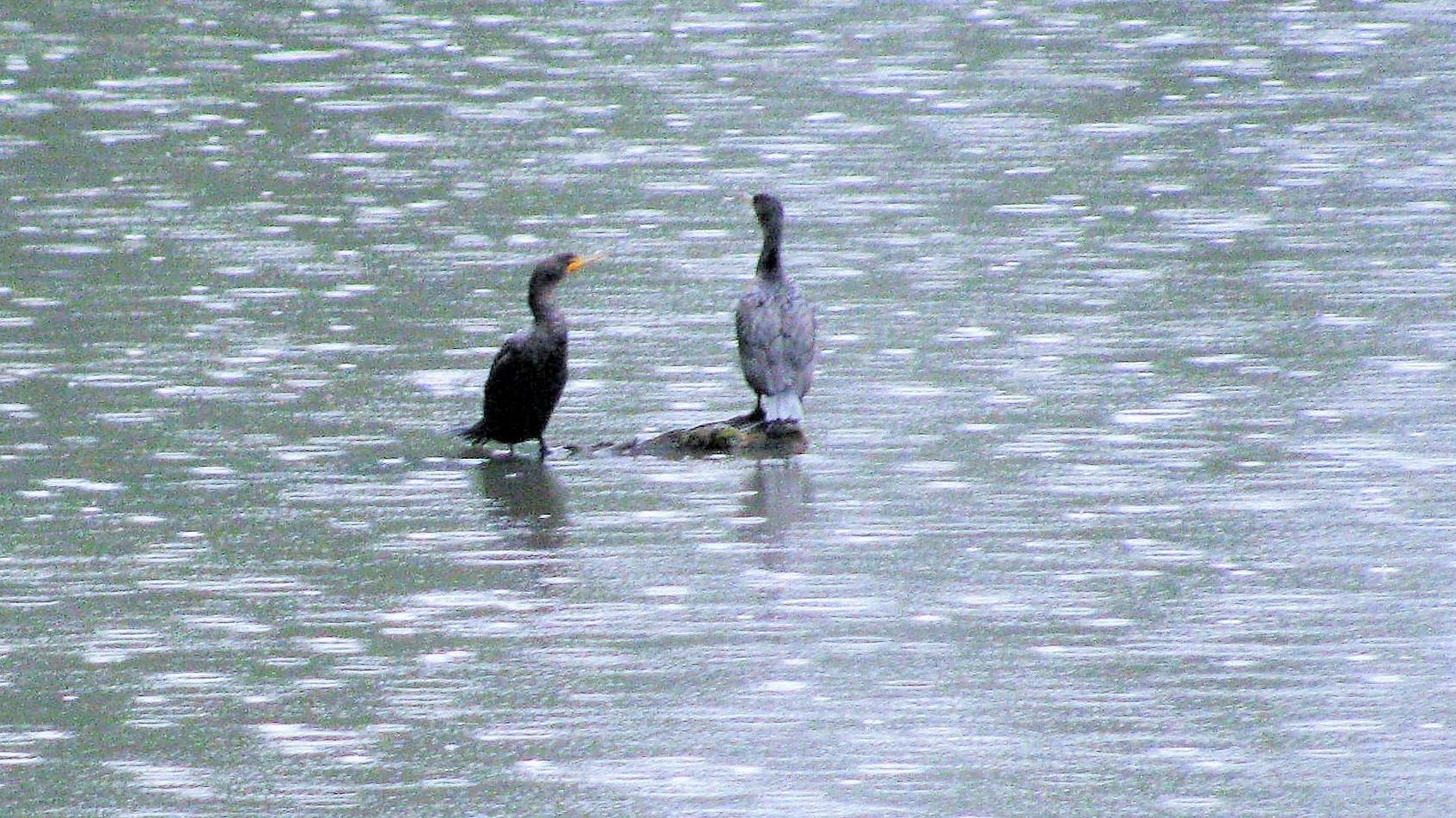 Birds Enjoying Rain on Wander Nature