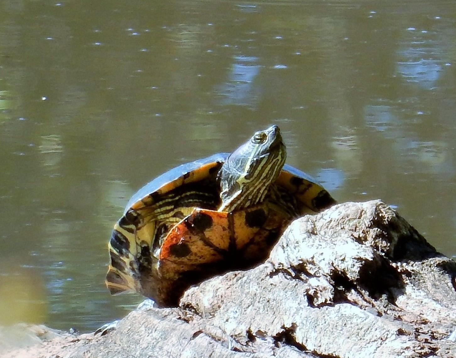 Turtle on Wander Nature